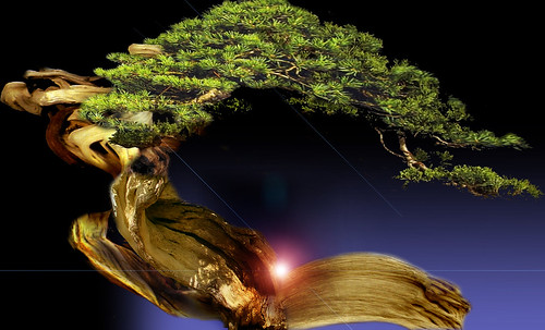 """Bonsai 067 • <a style=""""font-size:0.8em;"""" href=""""http://www.flickr.com/photos/30735181@N00/5261331627/"""" target=""""_blank"""">View on Flickr</a>"""