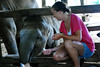DSC_0795 (Matty Jasperson) Tags: wild vacation elephant animal thailand gettyvacation2010 elephantconservatory