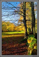 Colores (alfonso-tm) Tags: paisajes nikon arboles colores otoño cantabria d300 2470f28 ucieda