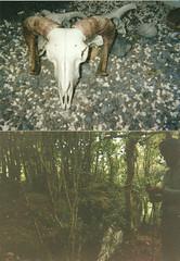 6 † 6 † 6 (_s t e v e n) Tags: ireland film galway forest photography 666 steven satanic gilligan goatskull hornedskull