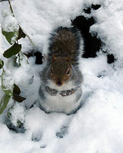 23767 - Squirrel, SIngleton Park