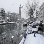 Helping birds survive the Dutch Winter