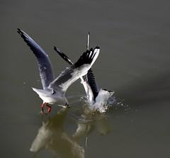 Pescando (roberto sainz) Tags: wow2 ltytr2 ltytr1 ltytr3 tufototureto