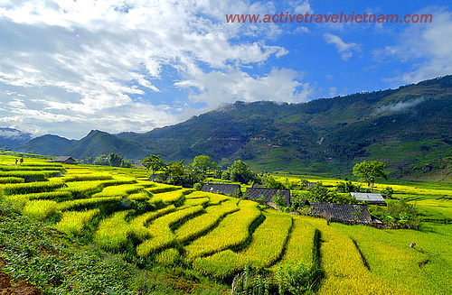 The terraced fields in Sa Pa