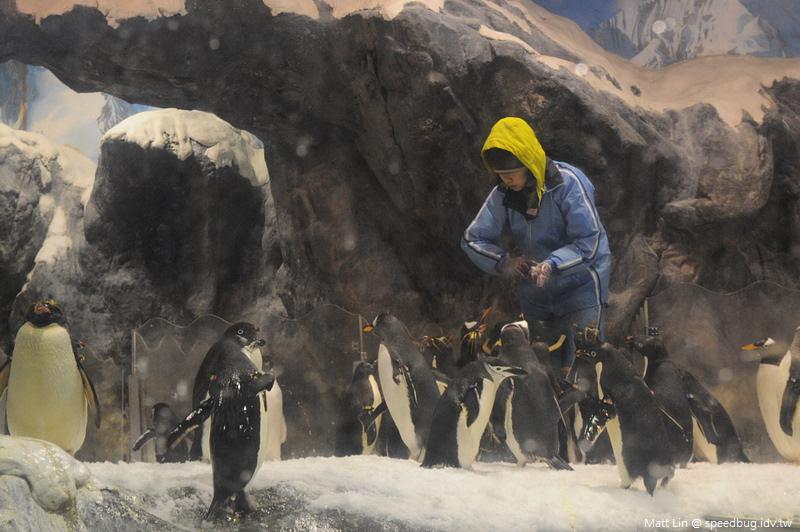 海生館企鵝餵食 (3).jpg