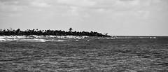 Crashing Waves (danielfoster437) Tags: ocean sea beach water canon mexico eos coast sand marine sandy yucatan palmtrees shore palmtree tropical caribbean whitesand tropics costamaya xsi 450d rebelxsi rebel450d