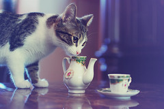 La vie est Belle (Kelly the Zebra) Tags: cute cat vintage kitten tea cups