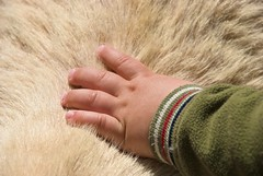 The Hand (chmeermann | www.chm-photography.com) Tags: animal fur kid child hand finger fingers goose kind ziege fell tier streicheln