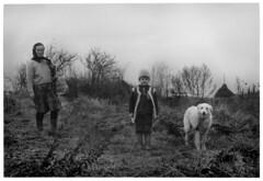 Belle and Sebastian (teddy.harvest) Tags: bw film darkroom paper print 50mm kodak 1600 romania hp5 ilford roumanie analogic maramures nikonfm scanfromprint nikkorais kodabrom ilfosol3 fromdarkroom iexchangeprint
