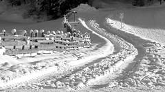 Spuren im Schnee (mikiitaly) Tags: schnee bw italy spuren schild sw zaun feldweg sdtirol altoadige verkehrsschild pfitschtal sailsevenseasmaster