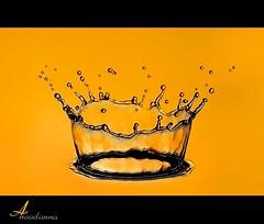 My Sun ☼ [ Explore Front Page ] (ANOODONNA) Tags: yellow golden explore crown fp frontpage sigma105mmf28exdgmacro أصفر شمسي mysun canoneos50d ذهبي anoodonna العنودالرشيد alanoodalrasheed ناج