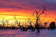 _MG_9366 (Wai Cheong Chan) Tags: pamamaroo lake sunrise landscape menindee andychan andy wai cheong chan