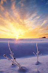 illuminated tips (Youronas) Tags: pink schnee light red sky orange sun sunlight snow plant cold ice nature clouds sunrise canon germany landscape bayern deutschland bavaria licht sticks frost december purple crystal dusk horizon natur pflanze himmel wolken frosty franconia 7d dmmerung franken kalt eis twigs landschaft sonne sonnenaufgang daybreak snowcovered flur frostig morgendmmerung sonnenlicht eiskristall stngel 1585