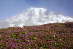 Mt. Rainier (craig tuttle) Tags: mt unitedstates rainier washingtonstate