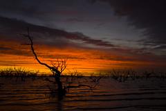 IMG_9978 (Bianca Ho) Tags: lake pamamaroo