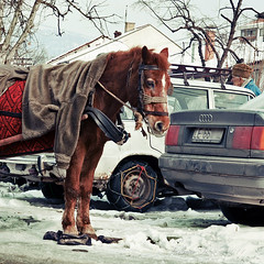 Modes of Transportation (Tanjica Perovic) Tags: life winter horse snow cold ice car contrast photography market serbia wheels documentary social scene jacket le vehicle opposites local cart tradition juxtaposition audi carpark comparison warmingup horsecart oldvsnew reportage horsepower srbija nisava pirot србија draughtanimal pirotserbia oldvsmodern tanjicaperovic serbiancarplate cartirechains pirotsrbija tanjicaperovicphotography зимаснежная fotografijepirota