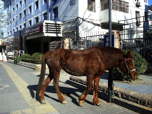 Horse in Chaowai
