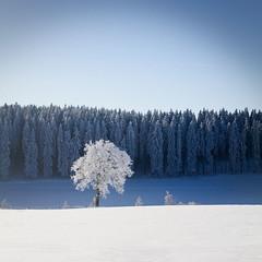 Winter #24 (Geoffrey Gilson) Tags: schnee trees winter white snow cold ice germany deutschland frozen hiver neige geoffrey wonderland weiss blanc froid glace gilson sauerland winterberg gele canoneos7d wwwgeoffreygilsonnet