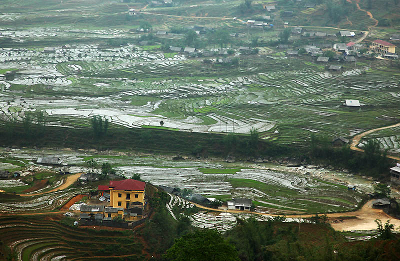 IMG_0378-w Sapa Rice Terrace crop