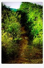 SENDERO (joferluna / Fernando Luna) Tags: verde green path venezuela margarita sendero caminito dailyshoot fotografosvenezolanos fernandoluna