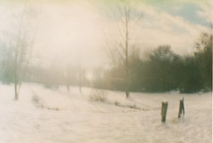 Silence (Oh beautiful world.) Tags: lomography lomo dianaf winter snow white nature ohbeautifulworld hannekevollbehr