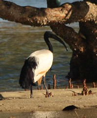 Mozambique-4465