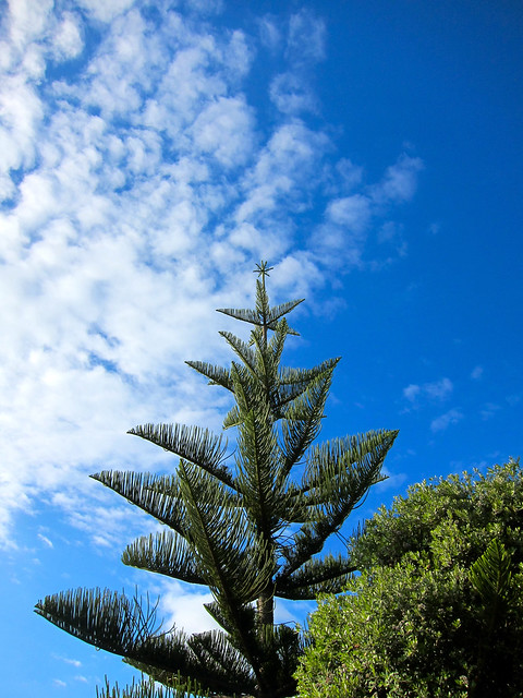 Beautiful Natural Christmas Tree