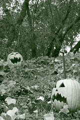 Haunted Faces (Soul of Armor) Tags: blackandwhite green fall halloween leaves faces jackolantern disneyland hill pumpkins tint disney haunted spooky dirt scared nightmarebeforechristmas greentint disneylandresort theartofdisneyland