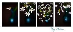 (lisamurray) Tags: flowers stilllife macro bokeh may springflowers springtime tamron90mm nikond90