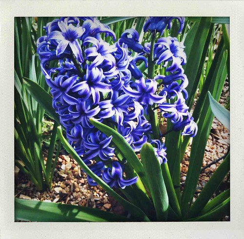 purple spring flower