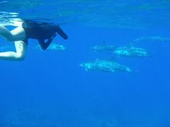 ハワイ島イルカと泳ぐツアー