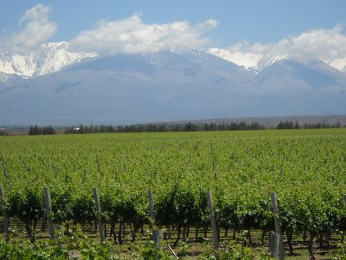 [Mendoza] Campos produzindo uvas para os vinhos que estão por vir