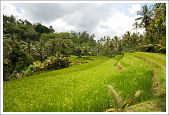 Sawah (papaija2008) Tags: travel bali green nature beautiful field digital canon indonesia eos rebel asia rice angle terrace south wide sigma palm east gunung 1020mm ubud sawah tampaksiring kawi xti 400d platinumheartaward earthasia doublyniceshot doubleniceshot tripleniceshot mygearandme mygearandmepremium mygearandmebronze mygearandmesilver mygearandmegold