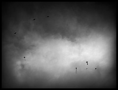 Flying High, In Moody Skies (allaerosol wants to smile always) Tags: light bw cold clouds dark flying singapore mood moody shadows gloomy sad cosina voigtlander wide dream surreal stormy super kites panasonic f45 textures nightmare float 15mm asph bnw dmc nightmares heliar superwideheliar gf1 lumx