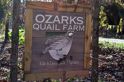 Ozarks Quail Farm