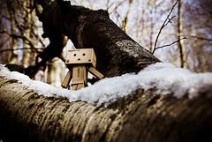 Tarzan ? (Zaskars) Tags: winter snow cold tree nature forest toy play pentax hiver sigma neige figurine 1770 lorraine arbre froid tarzan jouet fort moselle yotsuba danbo ecorce revoltech k10d danboard