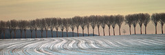 Winter Field And Trees (Sbastien Mamy) Tags: winter snow france tree nature landscape photography hiver explore neige paysage frontpage arbre yvelines olympuse3 sebastienmamy gettyimagesfranceq1 mnaxfrx3648x1216xcxl