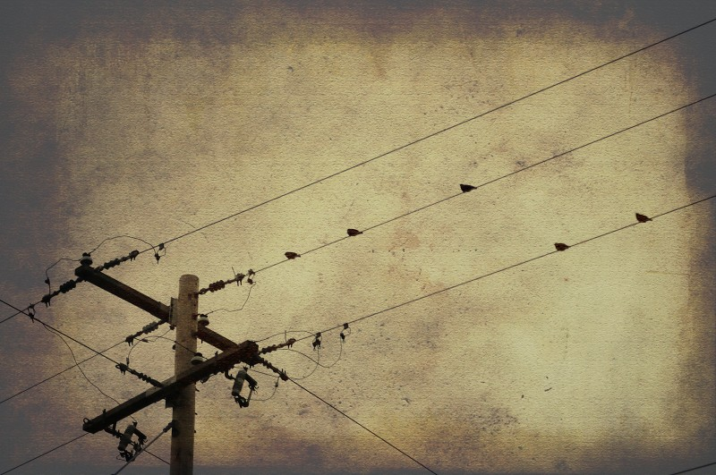 10.11.30 - Birds on the Wire