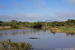 What a view (~~CSaturn~~) Tags: africa water southafrica safari hippos kruger