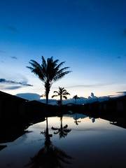 Espelho (guilherme@lbuquerque) Tags: folhas espelho azul canon casa cu prdosol poesia reflexo galhos suave coqueiro entardecer amaznia calmo rondnia dualidade canonsx20