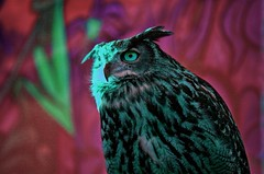 aldair owl (octopus minor) Tags: travel light sunset sky sun abstract reflection glass clouds mirror ship afternoon eagle space fair cielo owl fi sci pomeriggio