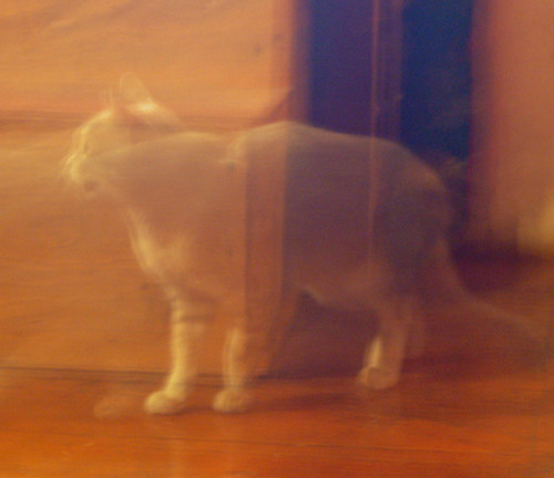 6ghost cat.jpg