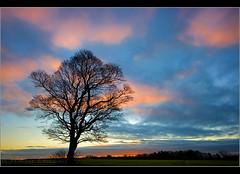 Last light.... (Digital Diary........) Tags: sunset colour tree sthelens lastlight merseyside chrisconway billinge crenk