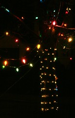 Festive Lights (bigbrowneyez) Tags: tree art colors night dark maple nightshot bright artistic pov christmaslights celebration lovely festivelights momsmapletree