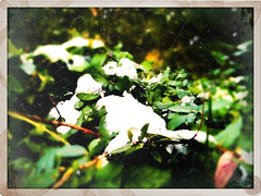 Bye Bye Snow (Indieano) Tags: cameraphone italy snow green art apple nature grass vintage garden italia colours grunge creative catanzaro iphone pictureshow laneve iphoneart iphoneography senandata