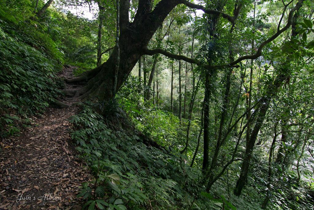 雲森尋楓觀瀑行