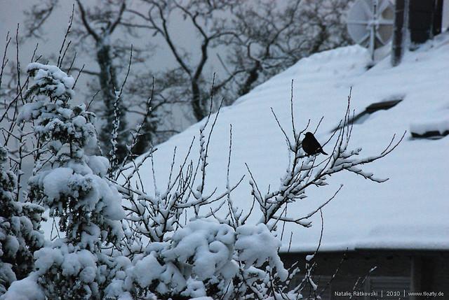 hattingen-12-2010_18