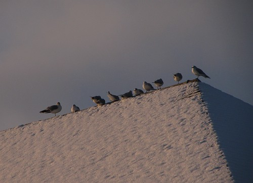 Seagull Rooftop Slope