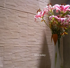 love today (GreeceColor) Tags: pink flowers light shadow sun texture love nature colors lilies lovely