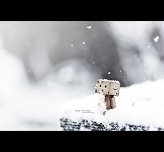 Danbo's First Snow (Dkillock) Tags: winter snow david anime cute japan scarf canon toy eos japanese prime robot model amazon dof open bokeh mark magic full cardboard ii frame 5d snowing f2 usm fullframe flakes 135mm mkii wideopen danbo amazoncojp llens canonef135mmf2lusm revoltech killock danboard 5dmarkii 5d2 5dmkii magicprime dkillock davidkillockphotography